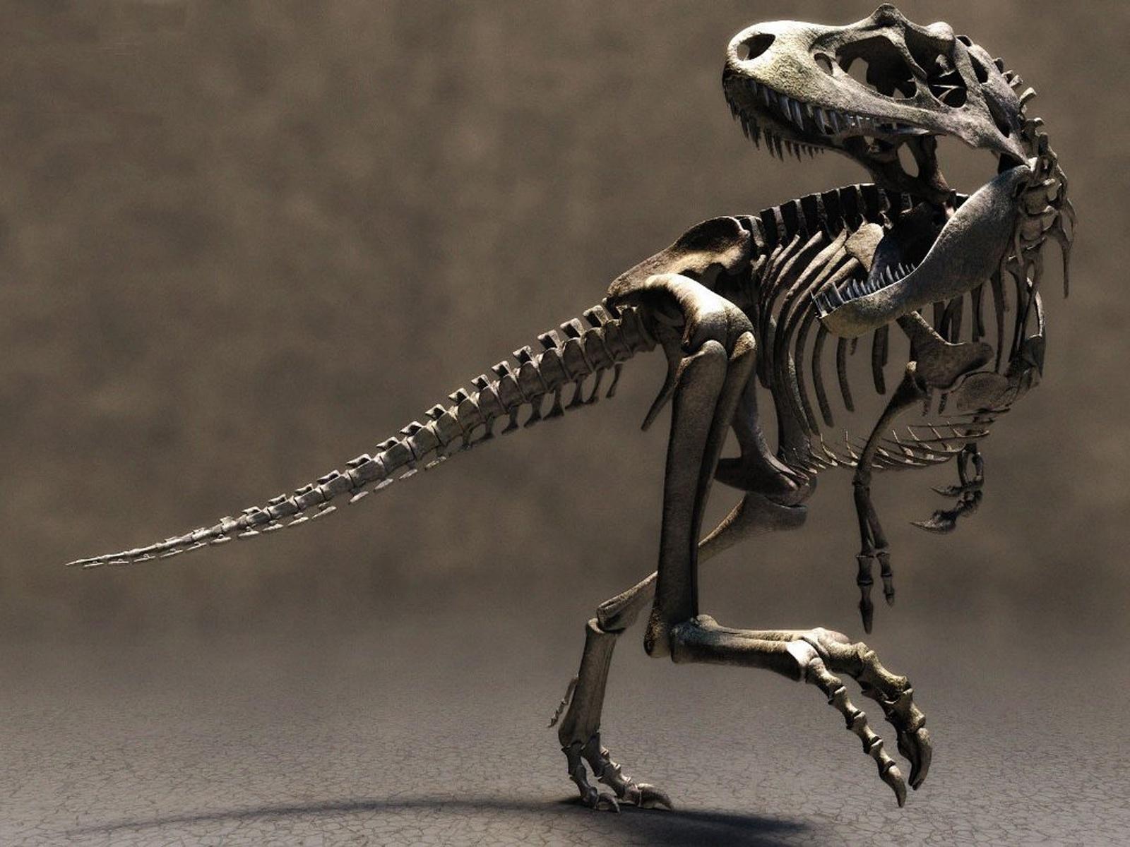 3d T-rex Skeleton