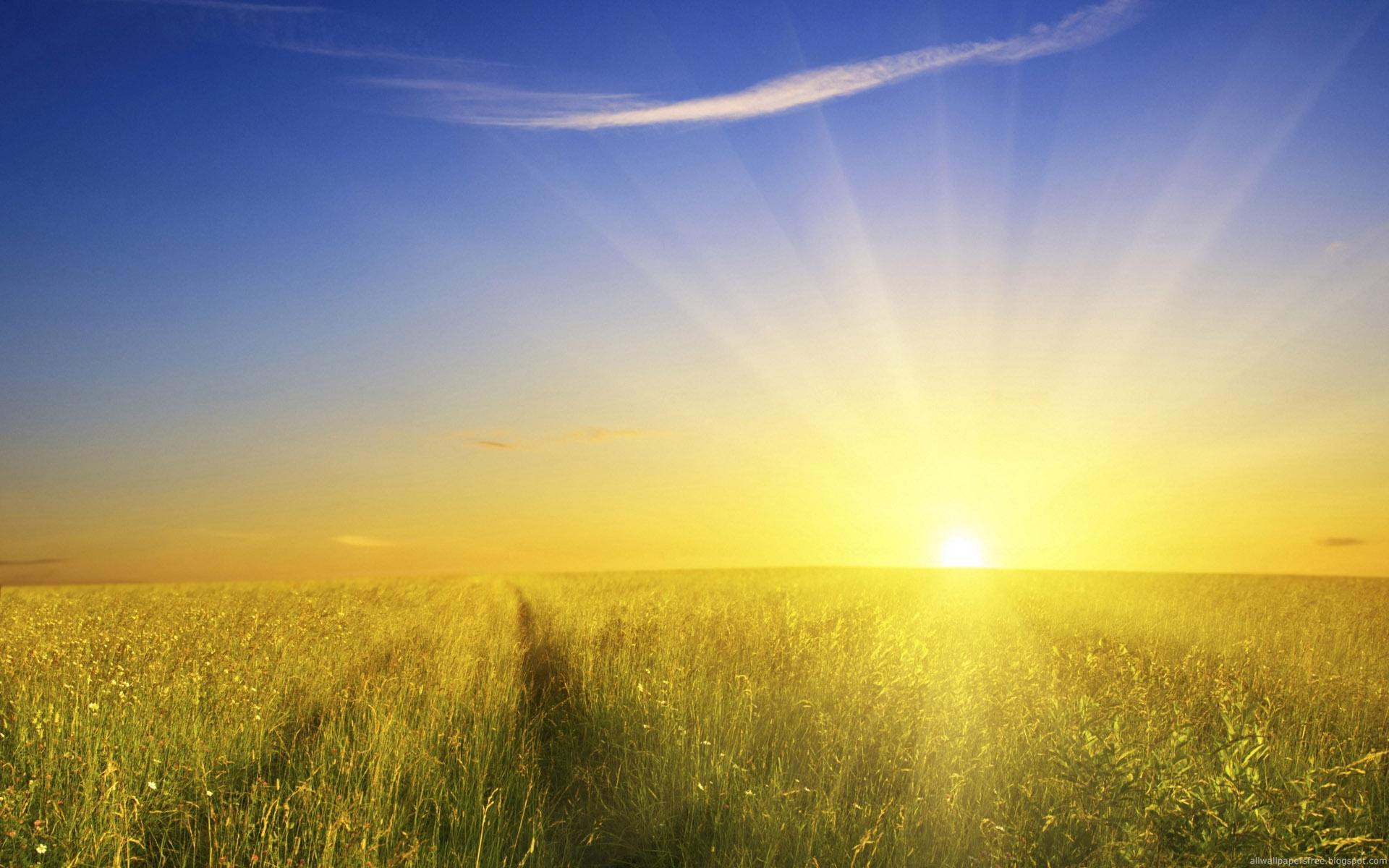 Rising Gold Sun