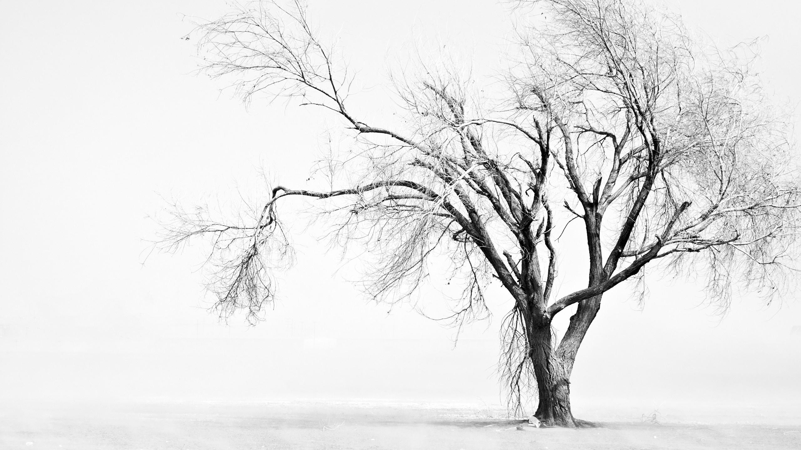 Sad Tree