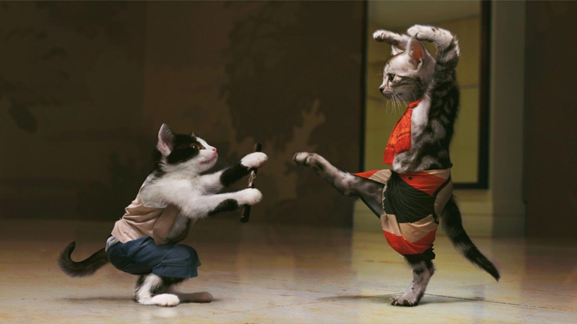 Cats Mimi Kung Fu