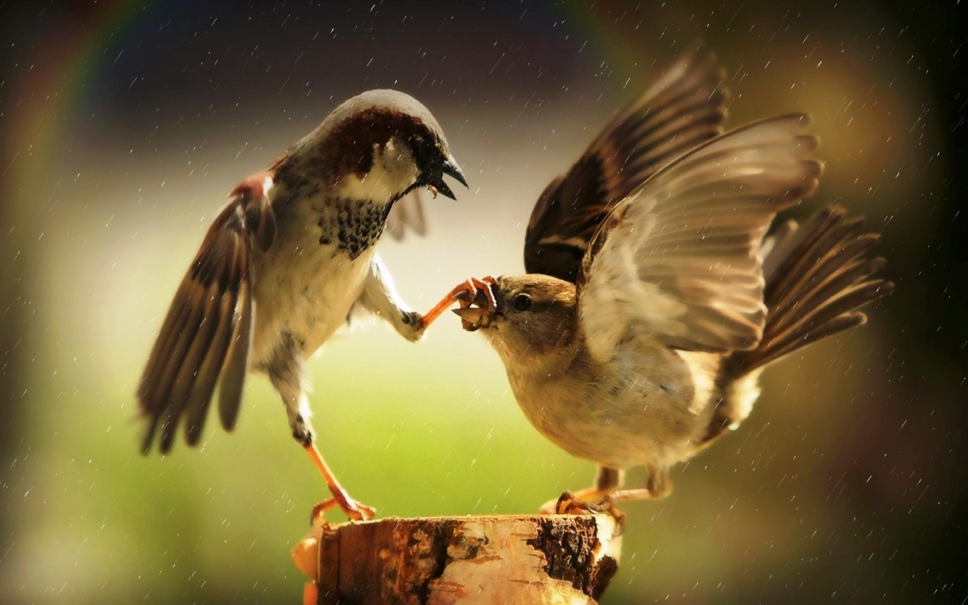 Birds Animals Finch
