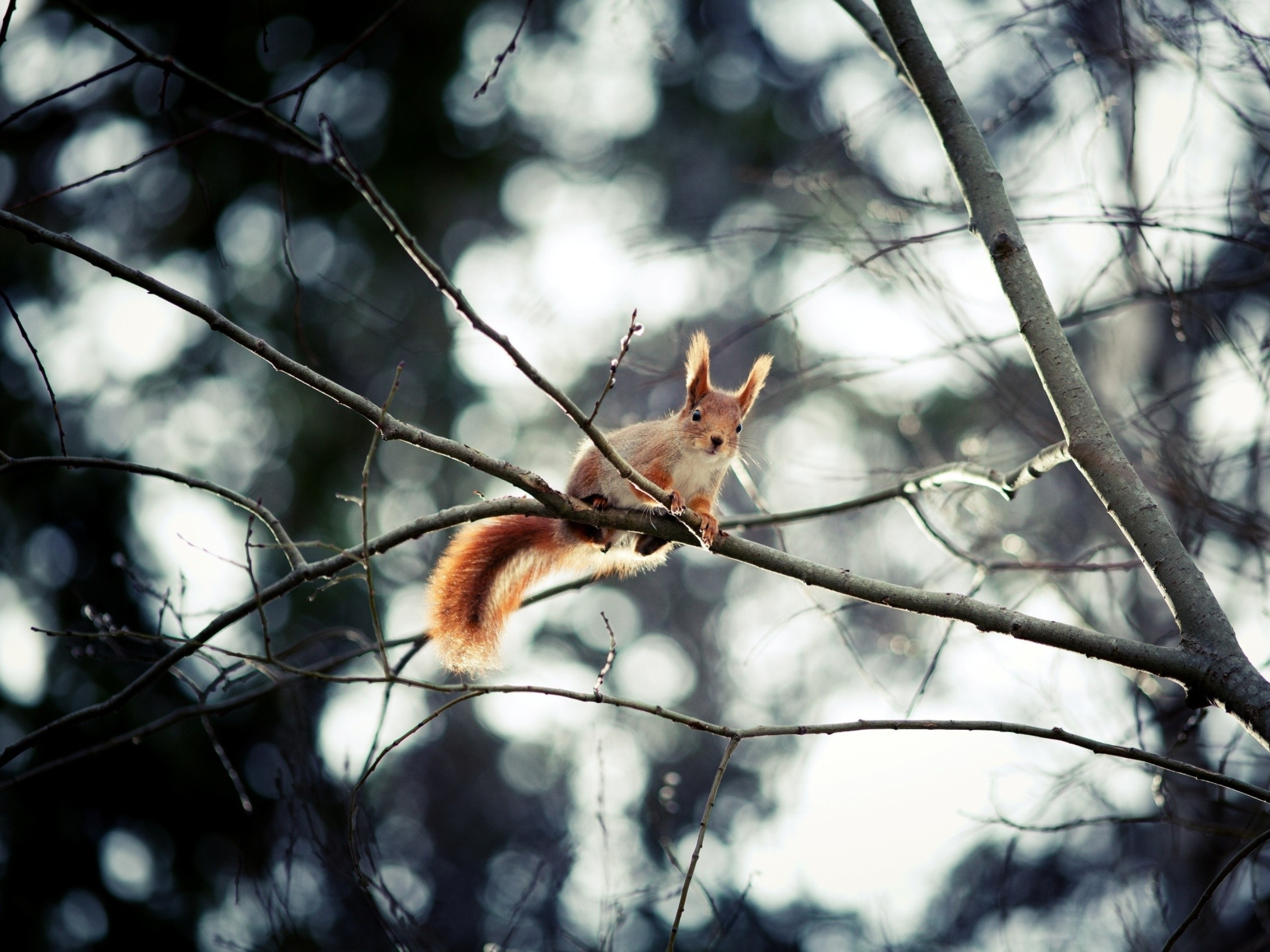 Trees Squirrels Depth Of Field