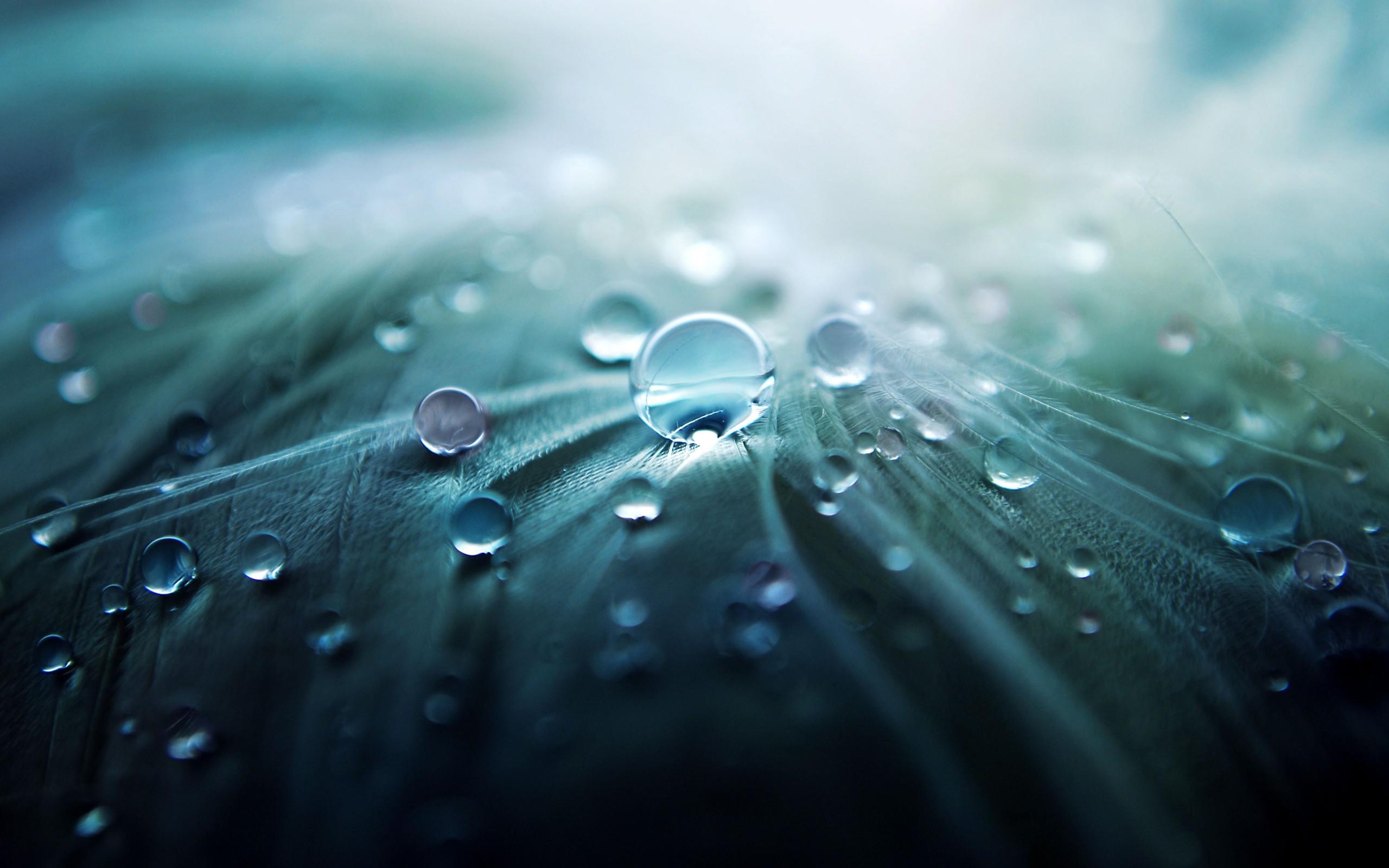 Water Leaves Drops Macro